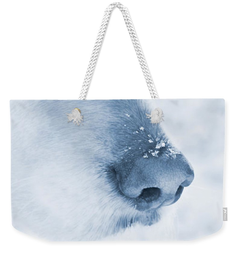Golden Retriever Weekender Tote Bag featuring the photograph Golden Retriever Dog Snowflakes On My Nose by Jennie Marie Schell
