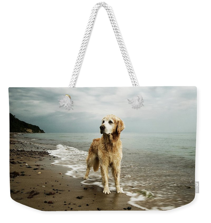 Pets Weekender Tote Bag featuring the photograph Golden Retriever On Beach by Jutta Bauer