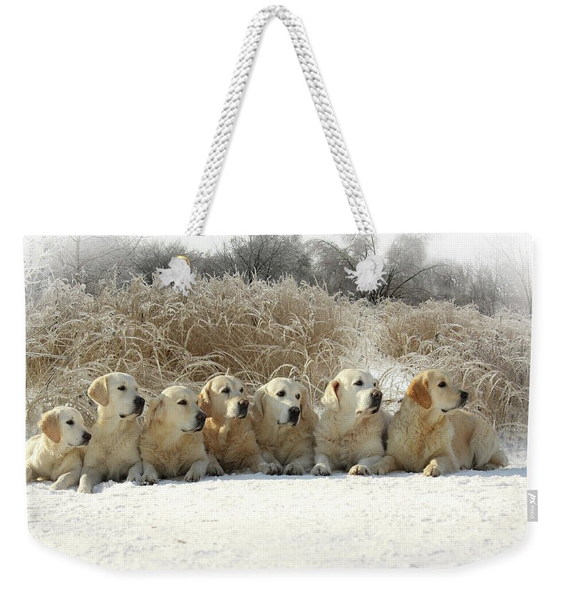 Pets Weekender Tote Bag featuring the photograph Golden Retrievers by Sergey Ryumin
