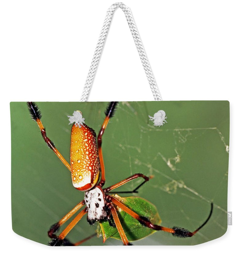 Animal Weekender Tote Bag featuring the photograph Golden Silk Spider With Stinkbug Prey by Millard H Sharp