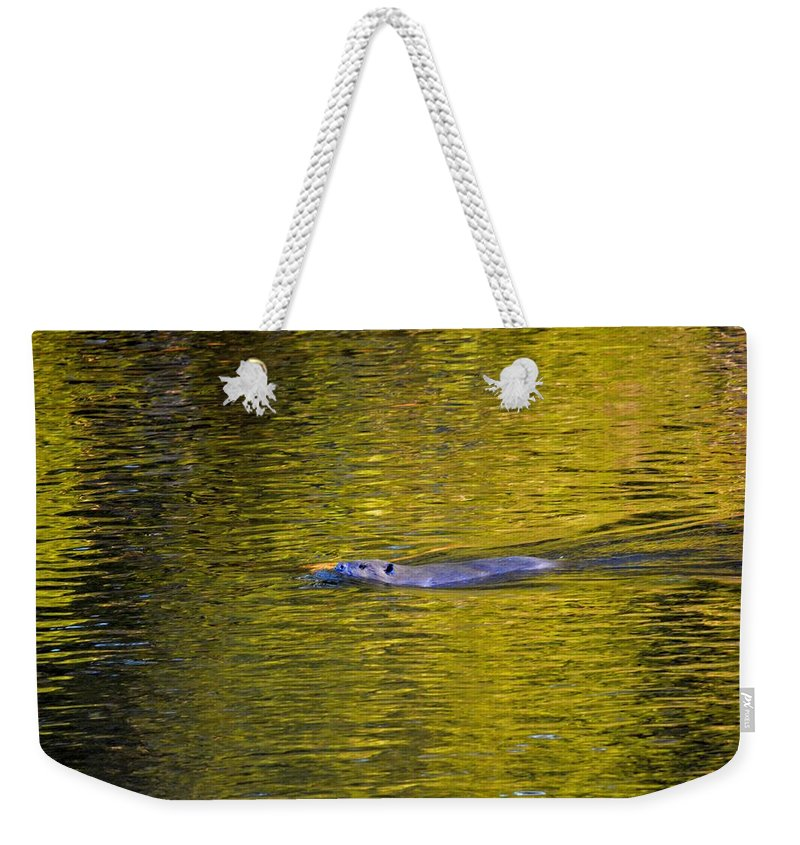 Beaver Weekender Tote Bag featuring the photograph Golden Waters by Thomas Phillips
