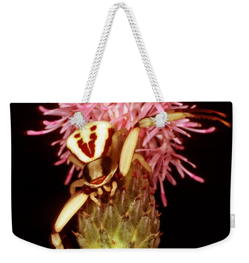 Nature Weekender Tote Bag featuring the photograph Goldenrod Crab Spider by Millard H. Sharp