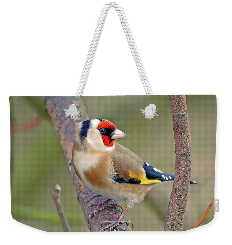 Animal Themes Weekender Tote Bag featuring the photograph Goldfinch by Kevspix
