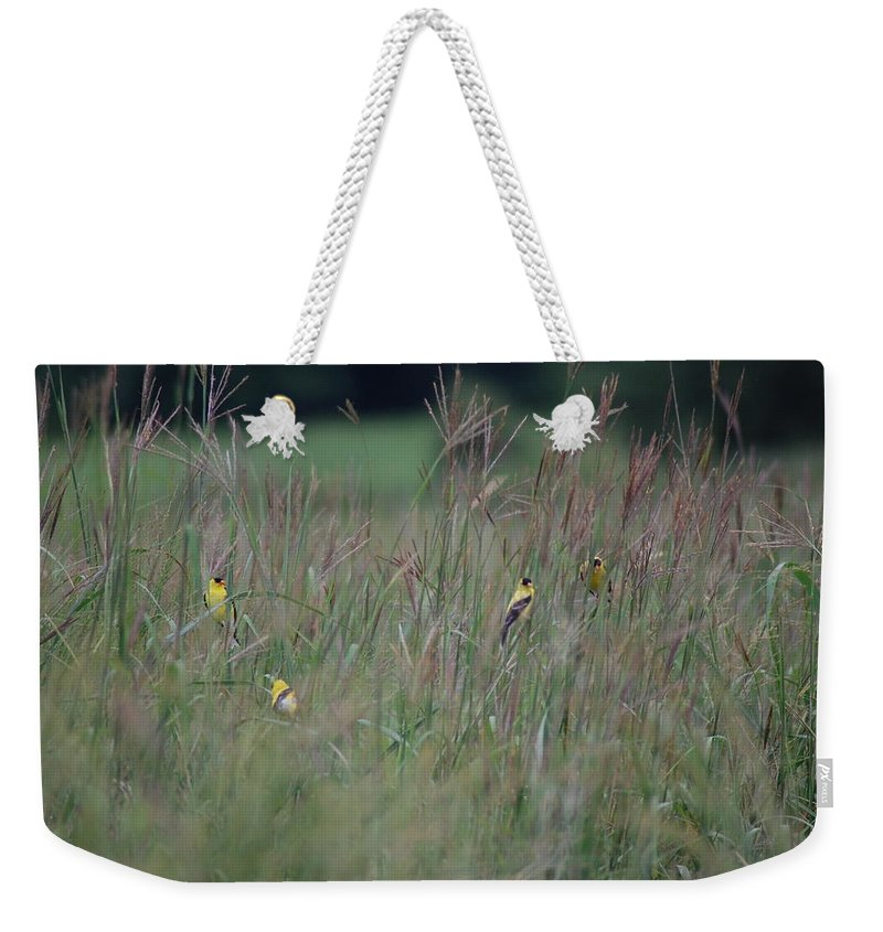 Bird Weekender Tote Bag featuring the photograph Goldfinch Party by Susan Patrie