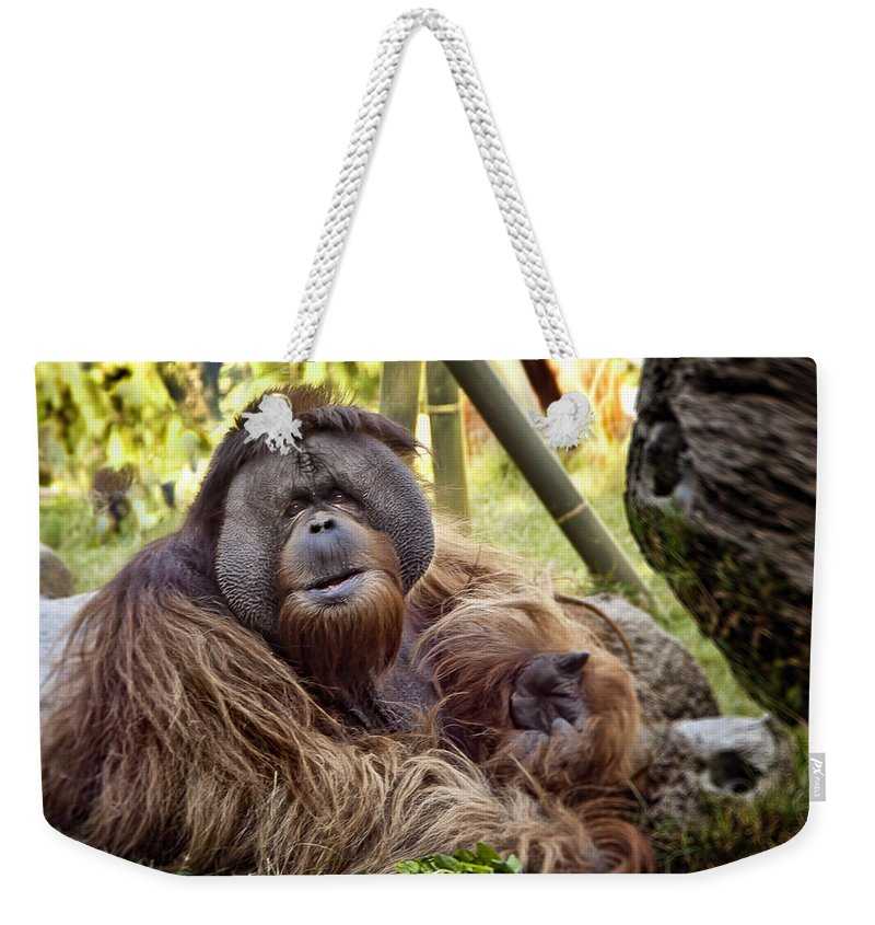 Monkey Weekender Tote Bag featuring the photograph Good Day Mate by Jon Berghoff