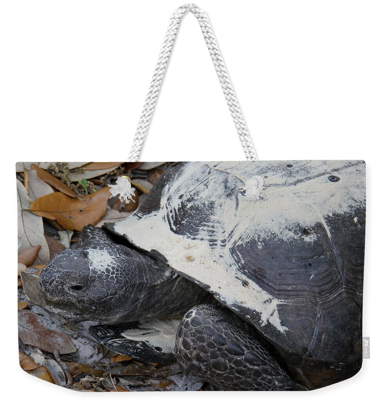 Gopher Tortoise Weekender Tote Bag featuring the photograph Gopher Tortoise Close Up by Doris Potter