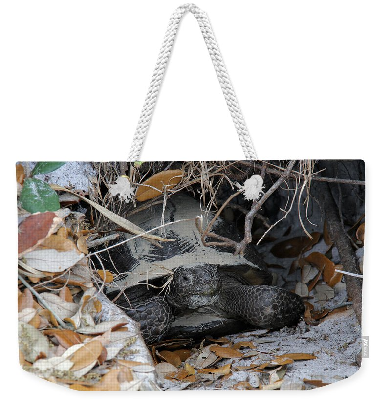 Gopher Tortoise Weekender Tote Bag featuring the photograph Gopher Tortoise by Doris Potter