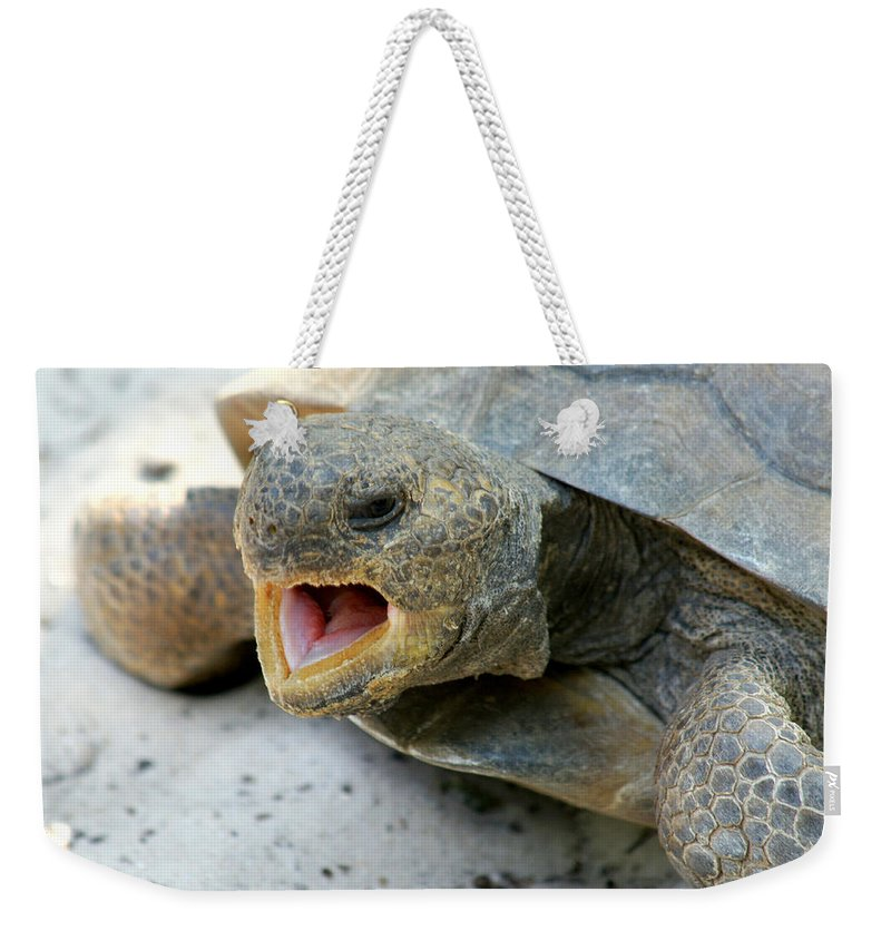 Tortoise Weekender Tote Bag featuring the photograph Gopher Tortoise by Larry Allan