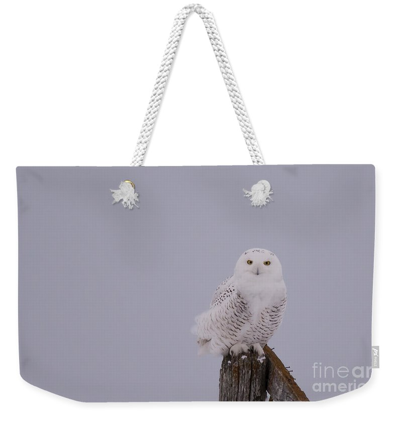 Field Weekender Tote Bag featuring the photograph Gorgeous Bird by Cheryl Baxter