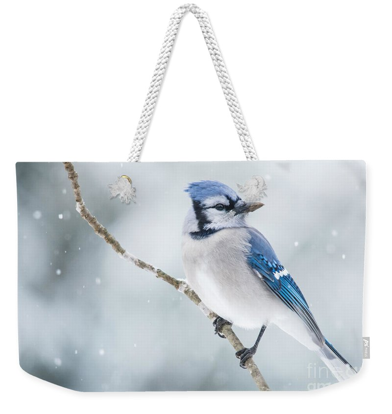 Weekender Tote Bag featuring the photograph Gorgeous Blue Jay In The Snow by Cheryl Baxter
