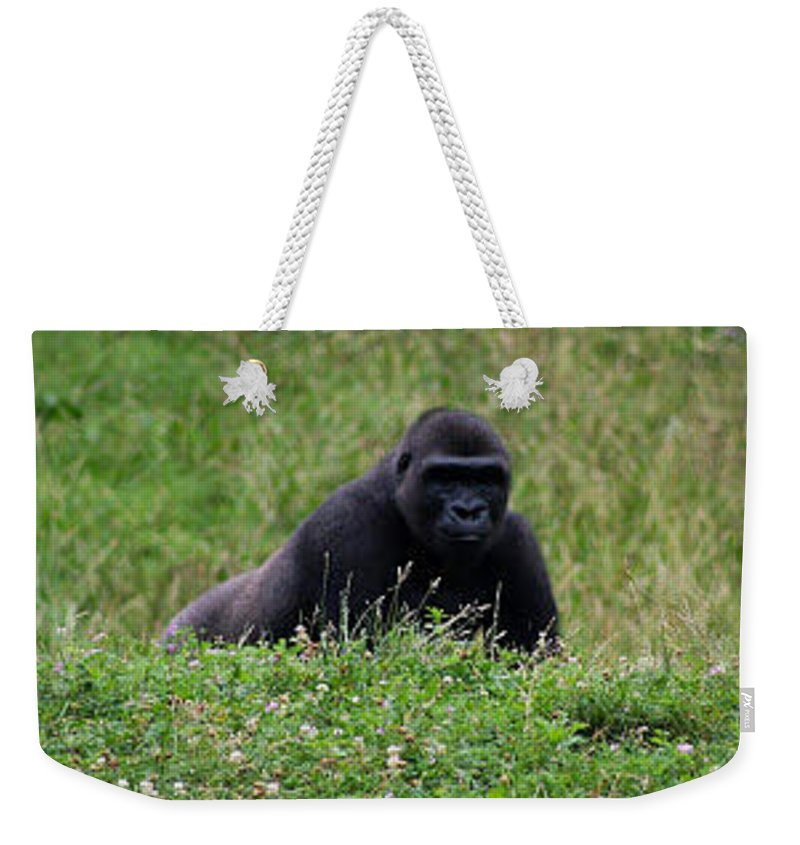 Animals Weekender Tote Bag featuring the photograph Gorilla On The Hunt by Kathleen Odenthal