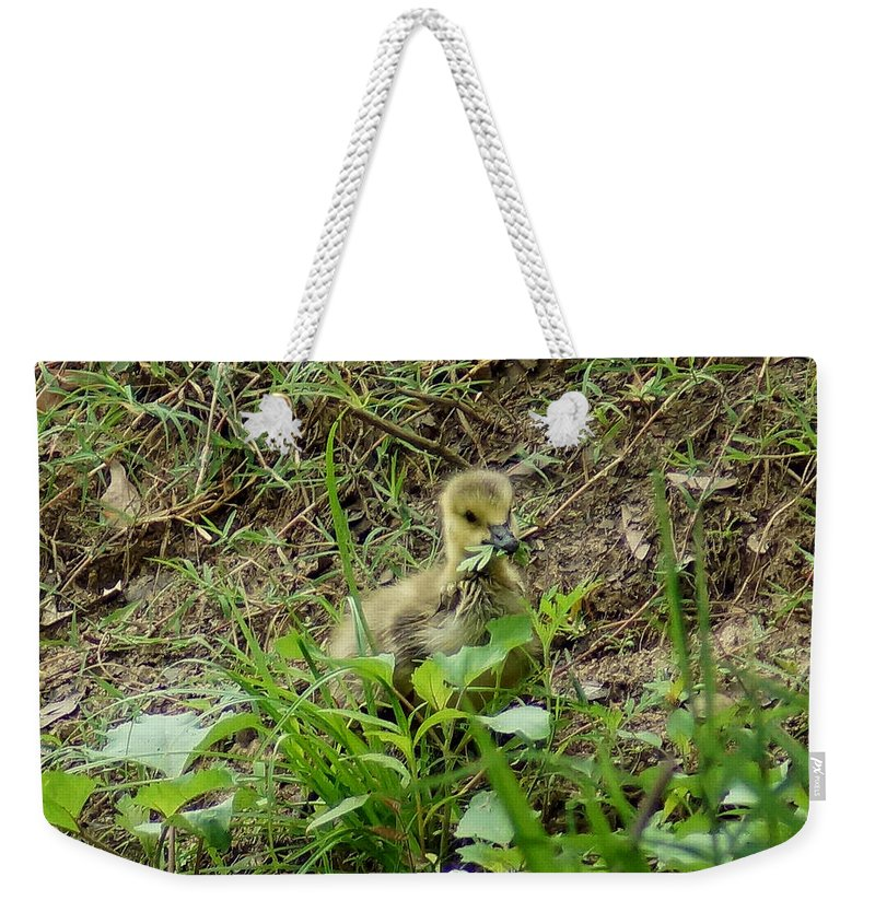 Digital Photography Weekender Tote Bag featuring the photograph Gosling Chewing On Some Grass by Kim Pate