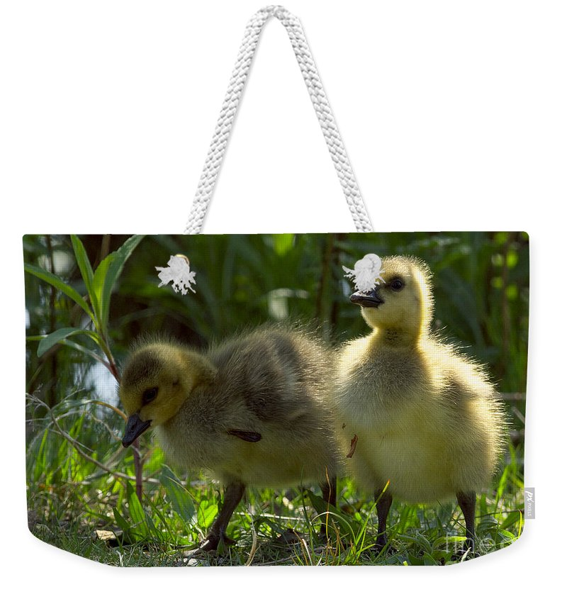 Canada Geese Goslings Weekender Tote Bag featuring the photograph Goslings 5 by Sharon Talson