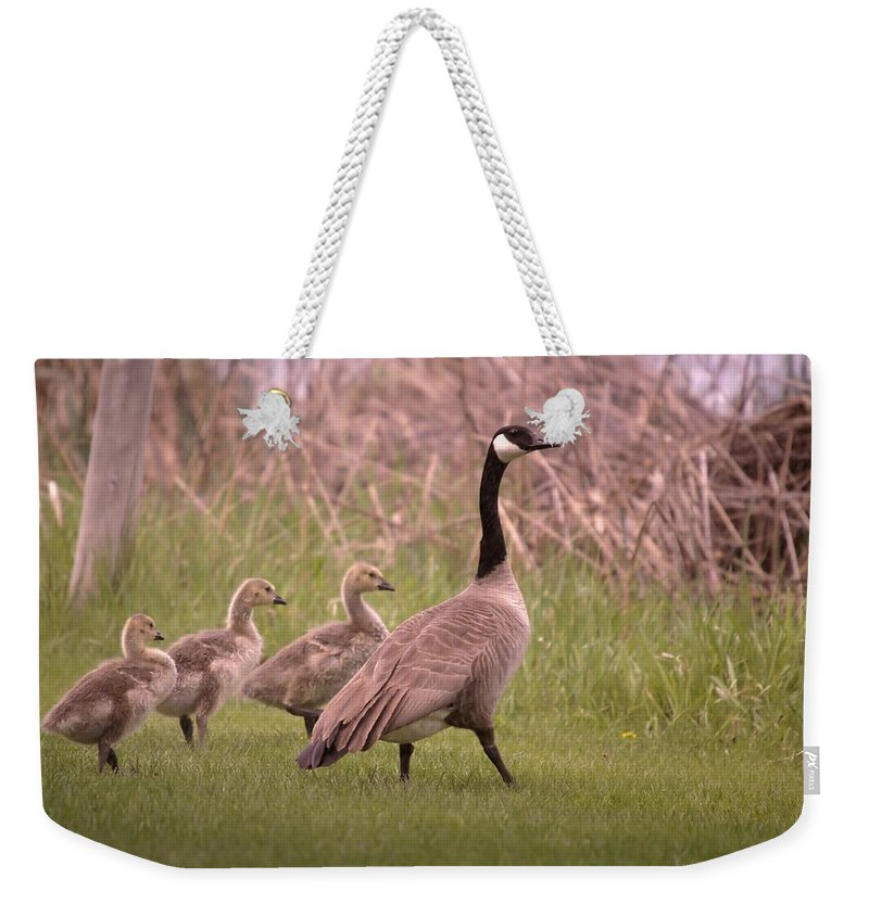 Geese Weekender Tote Bag featuring the photograph Goslings On A Walk by Jeff Swan