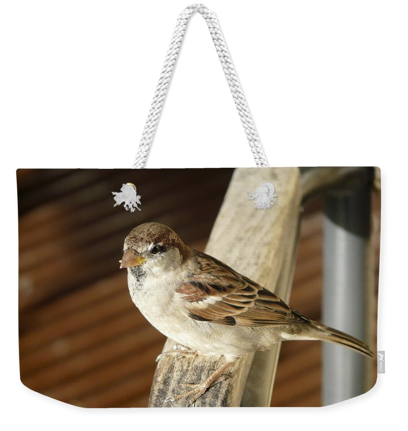Bird Weekender Tote Bag featuring the photograph Got Some More by Valerie Ornstein