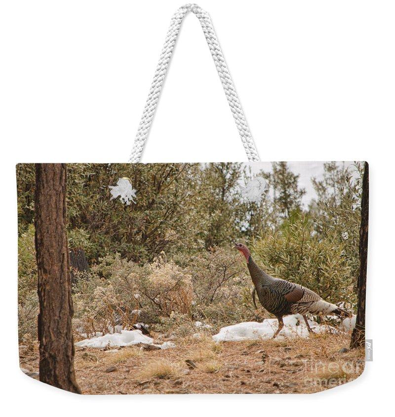 Wild Turkey Weekender Tote Bag featuring the photograph Gould's Wild Turkey Vii by Donna Greene