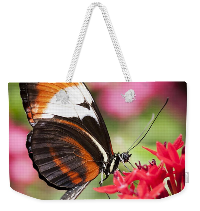 Butterfly Weekender Tote Bag featuring the photograph Grace by Patty Colabuono