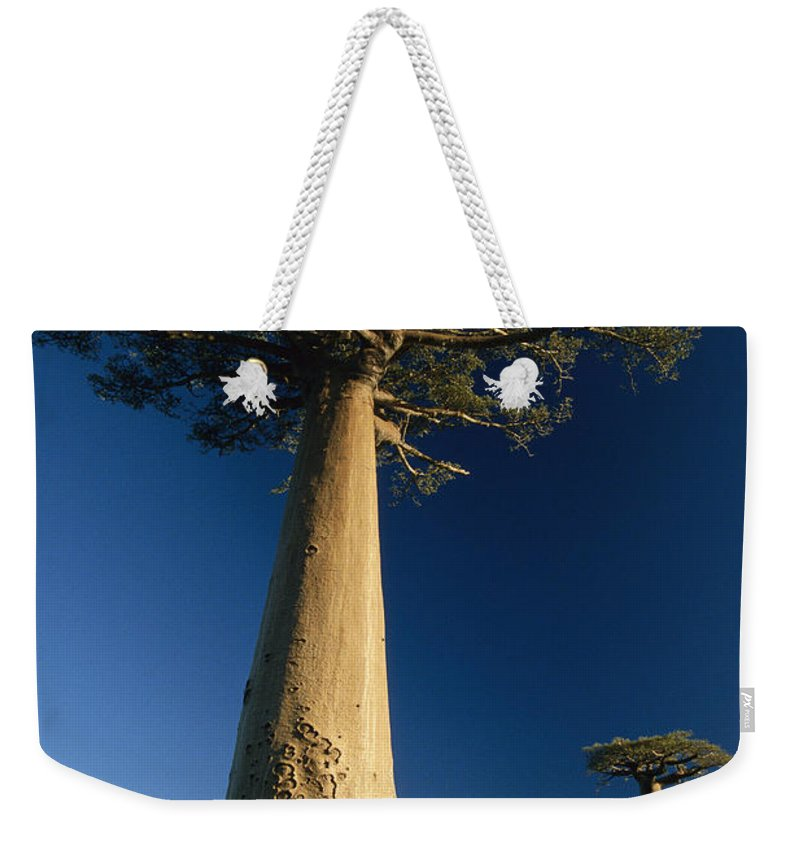 Feb0514 Weekender Tote Bag featuring the photograph Grandidiers Baobab Trees Madagascar by Konrad Wothe