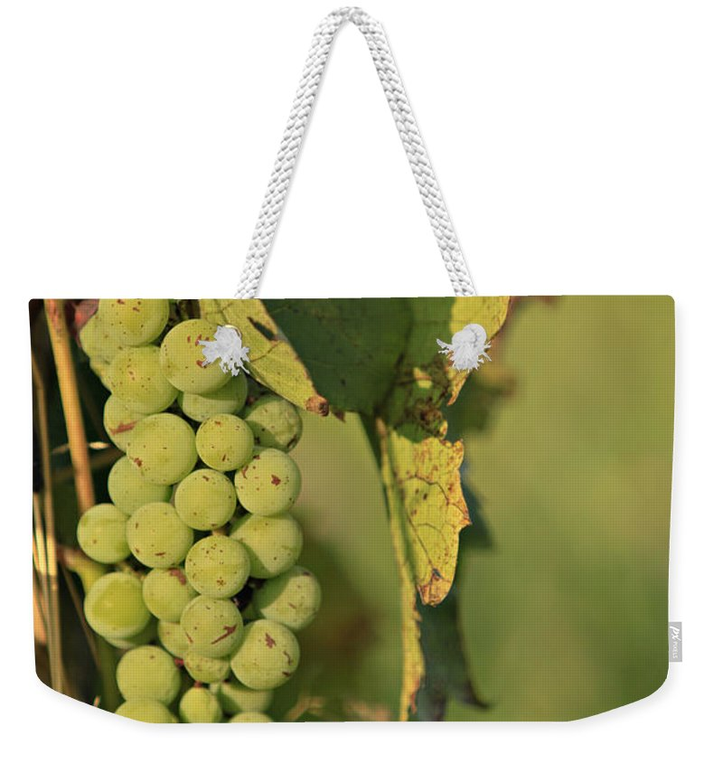 Leaf Weekender Tote Bag featuring the photograph Grapes by Dan Radi