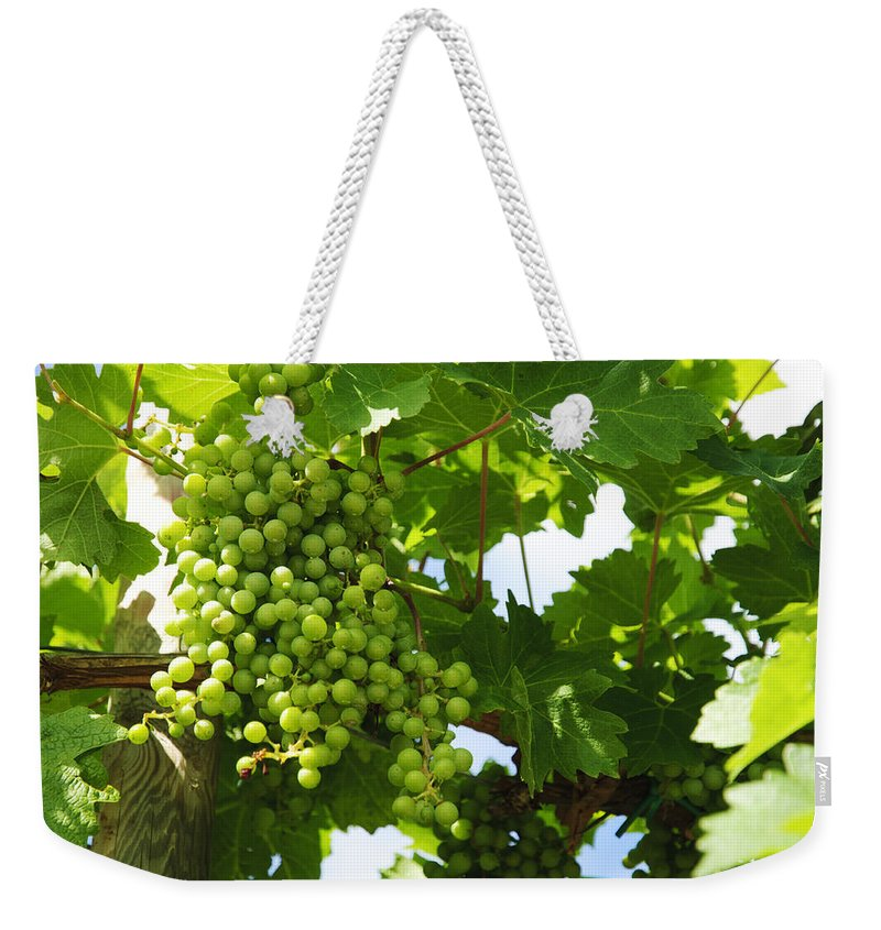Grape Weekender Tote Bag featuring the photograph Grapes In A Vineyard by Chevy Fleet