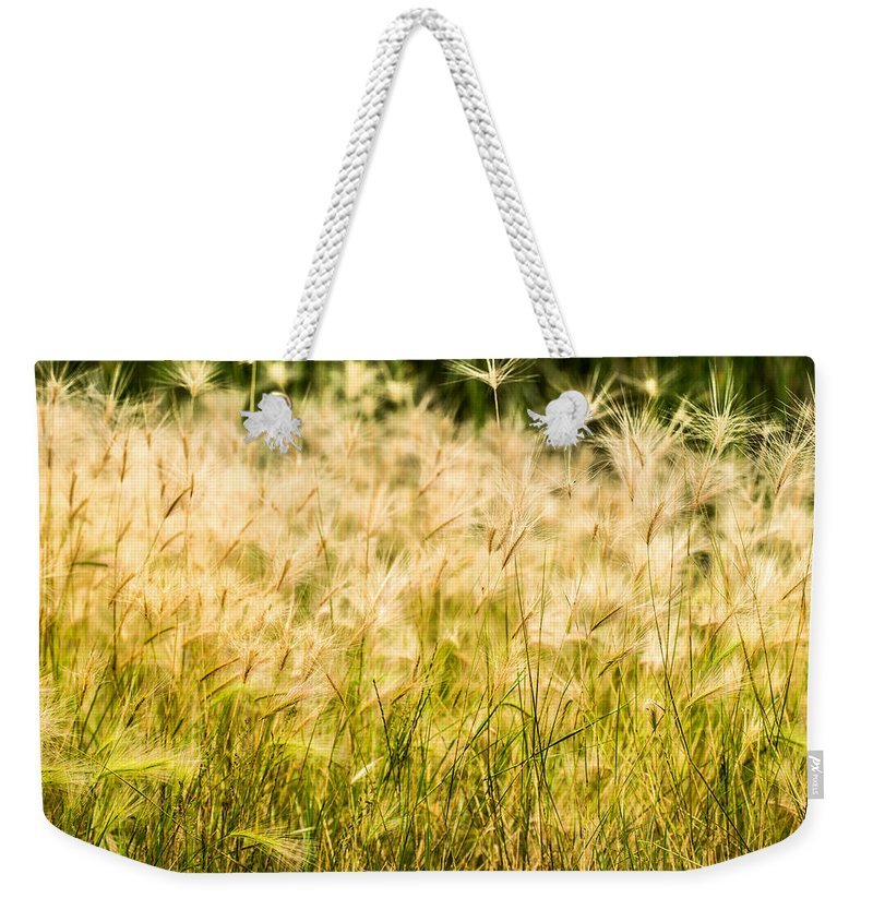 Grasses Weekender Tote Bag featuring the photograph Grass Feathers by Onyonet Photo Studios