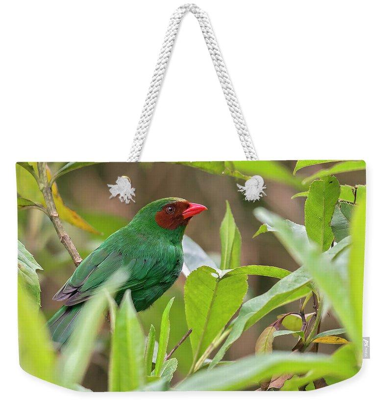 Birds Weekender Tote Bag featuring the photograph Grass-green Tanager by Juan Jose Arango