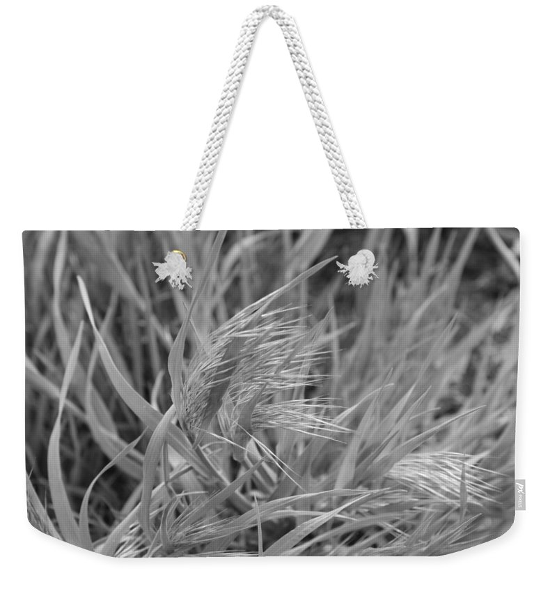 Grass Weekender Tote Bag featuring the photograph Grass by Tony Pacelli