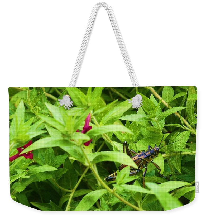 Grasshopper Weekender Tote Bag featuring the photograph Grasshopper by Chuck Hicks