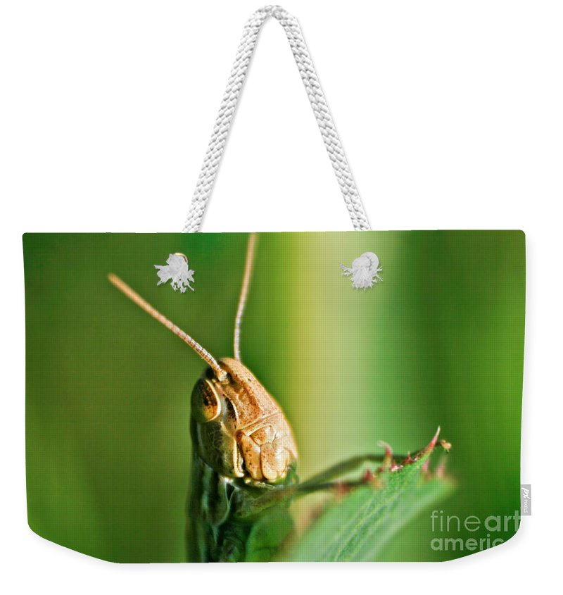 Up Weekender Tote Bag featuring the photograph Grasshopper by Dan Radi
