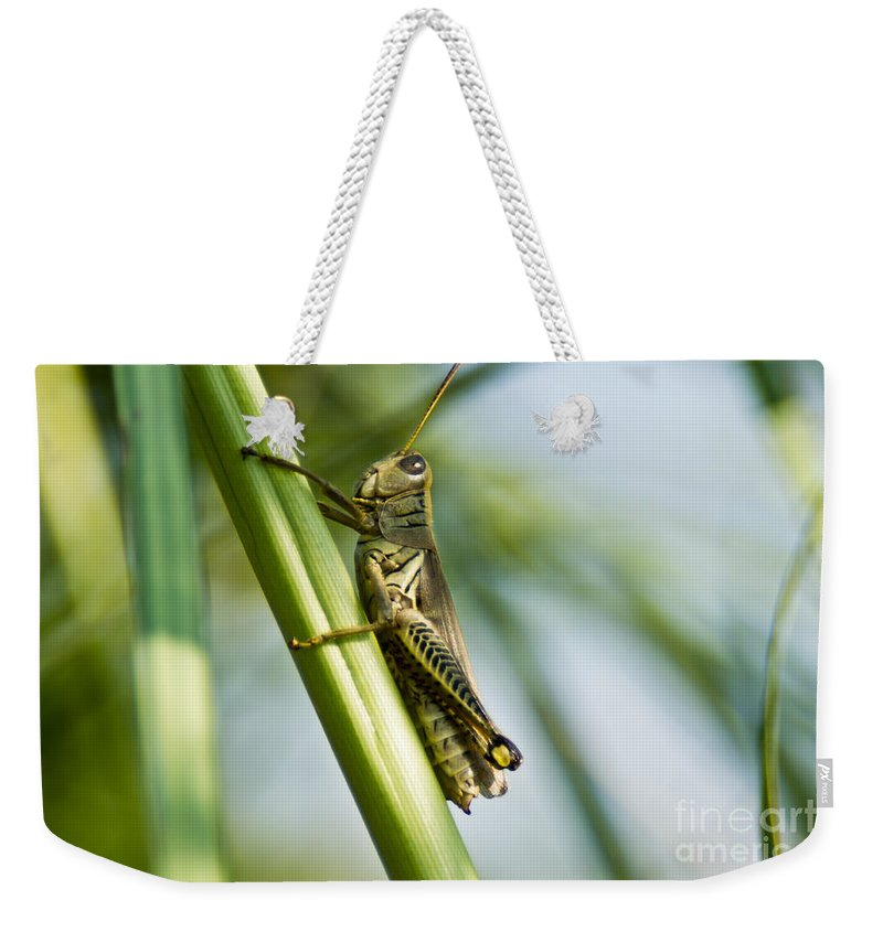 Grass Weekender Tote Bag featuring the photograph Grasshopper by Scott Hervieux