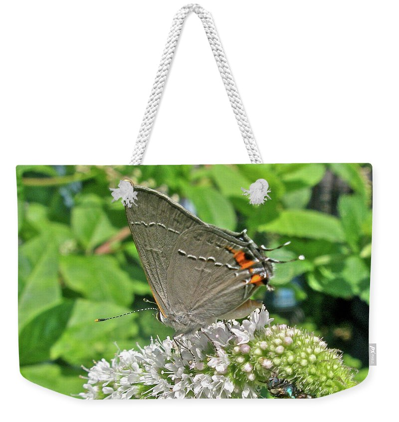 Butterfly Weekender Tote Bag featuring the photograph Gray Hairstreak Butterfly - Strymon Melinus by Mother Nature