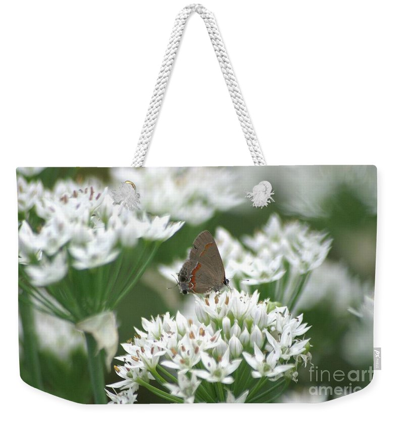 Gray Hairstreak Weekender Tote Bag featuring the photograph Gray Hairstreak On White Blossoms by Living Color Photography Lorraine Lynch