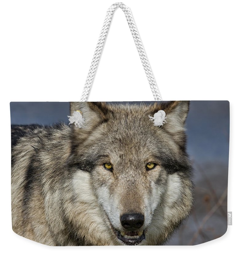 Nature Weekender Tote Bag featuring the photograph Gray Wolf Portrait by Martin Belan