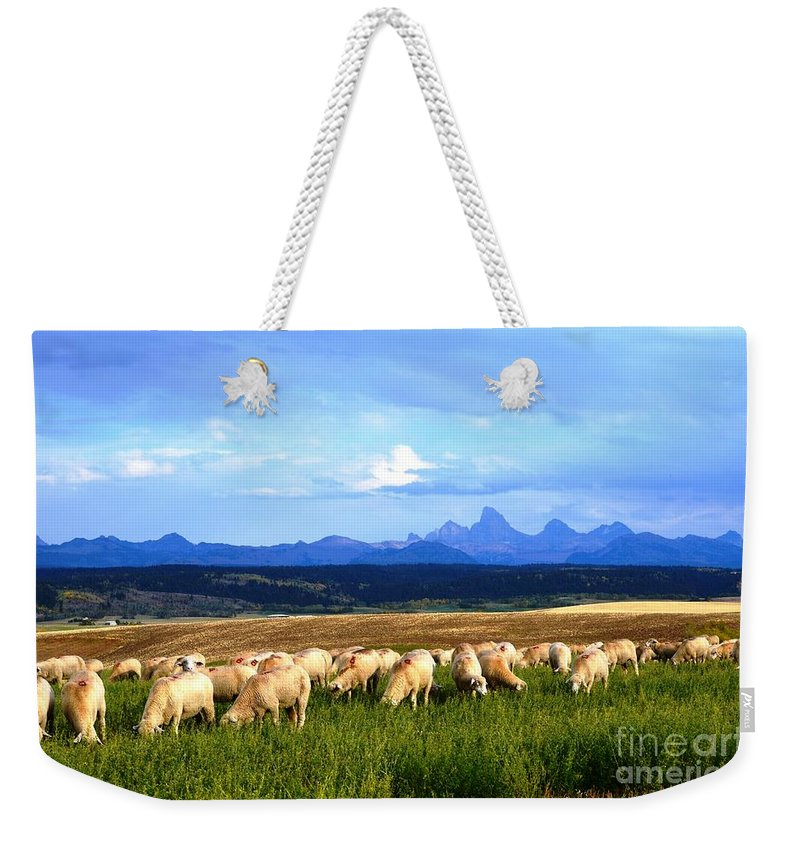 Sheep Weekender Tote Bag featuring the photograph Grazing by Deanna Cagle