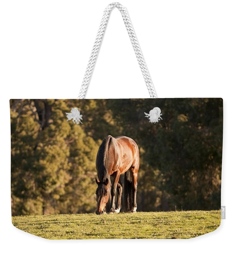 Horse Weekender Tote Bag featuring the photograph Grazing Horse At Sunset by Michelle Wrighton