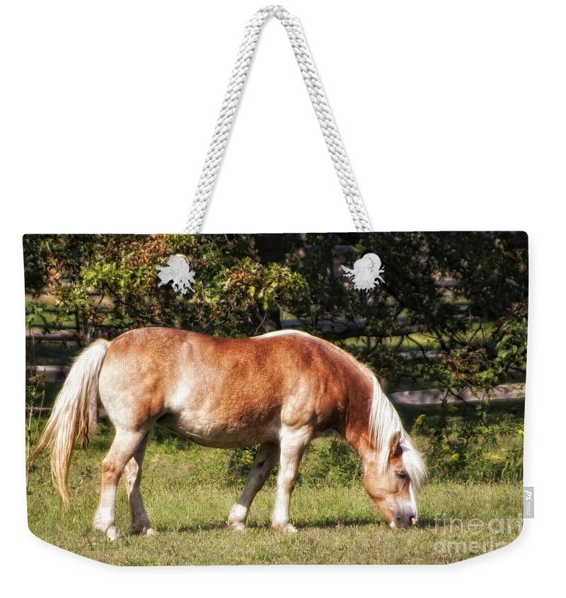 Horse Weekender Tote Bag featuring the photograph Grazing by Timothy Hacker