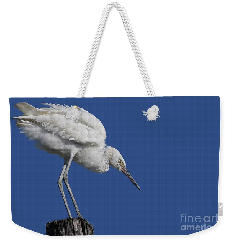 Bird Weekender Tote Bag featuring the photograph On Top Of The World... Pole by Meg Rousher