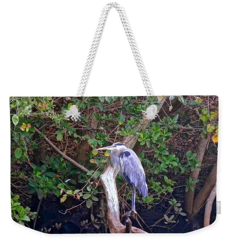 Great Blue Heron Weekender Tote Bag featuring the photograph Great Blue Heron Resting by Joe Wyman