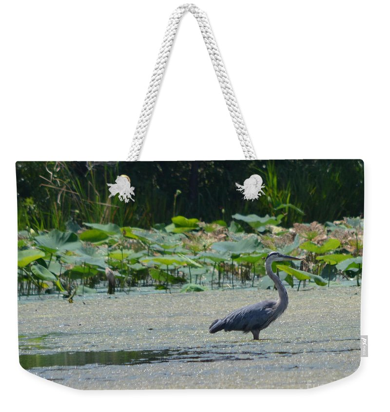 Herons Weekender Tote Bag featuring the photograph Great Blue Heron by Ruth Housley