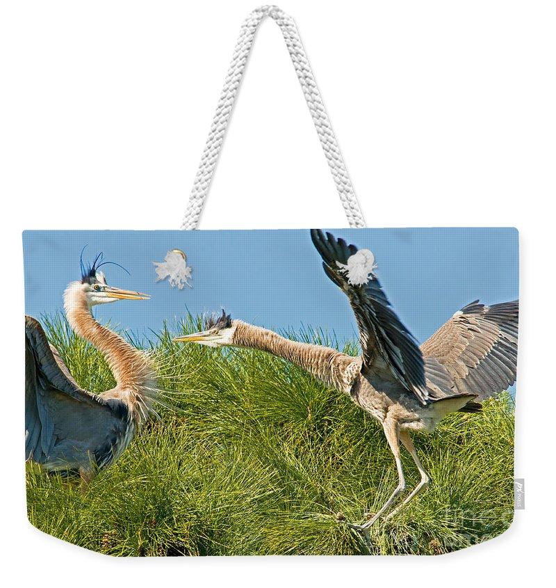 Great Blue Heron Weekender Tote Bag featuring the photograph Great Blue Herons by Millard H. Sharp