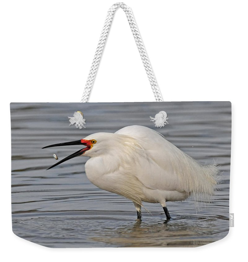 Egret Weekender Tote Bag featuring the photograph Great Catch by Dave Mills