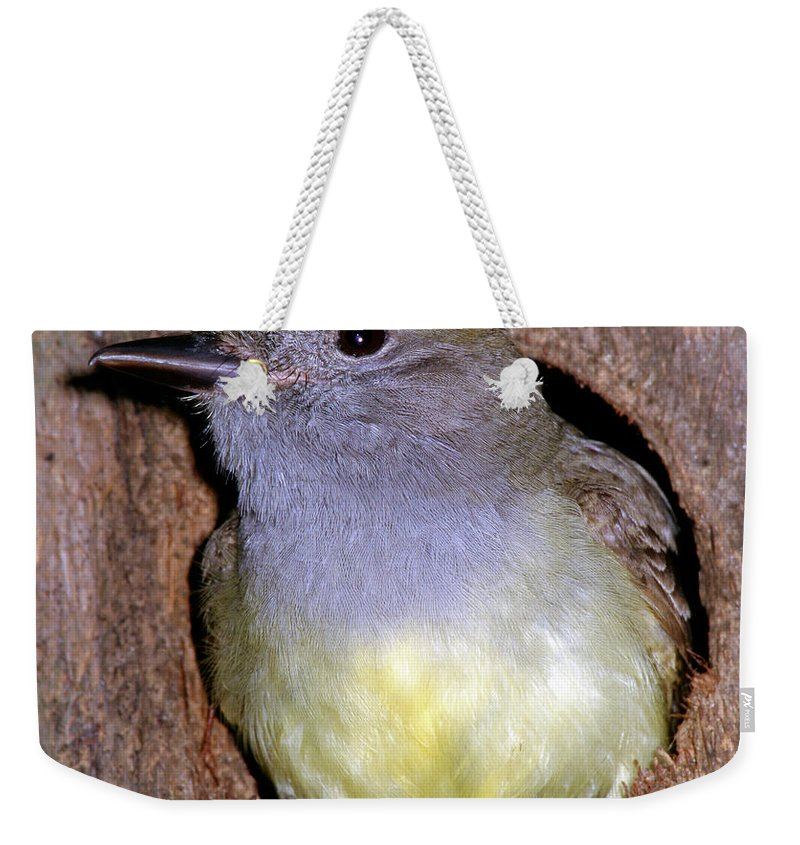 Animal Weekender Tote Bag featuring the photograph Great Crested Flycatcher In Nest Cavity by Millard H. Sharp