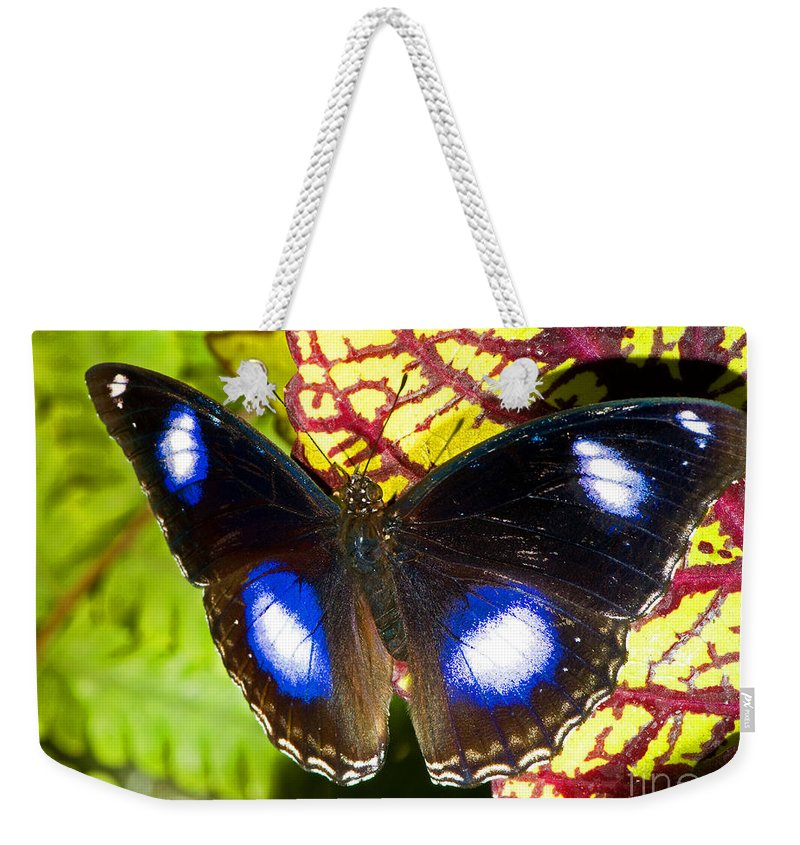 Nature Weekender Tote Bag featuring the photograph Great Eggfly Butterfly by Millard H. Sharp
