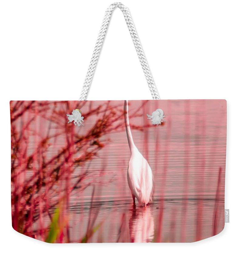 White Weekender Tote Bag featuring the photograph Great Egret Ardea Alba Egretta by Alex Grichenko