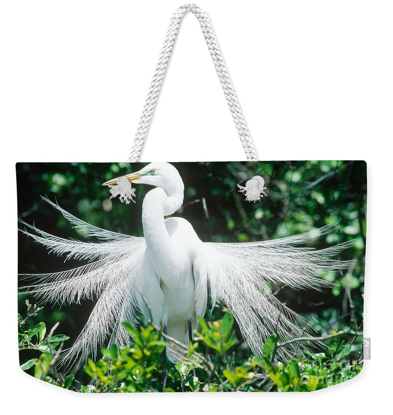 Fauna Weekender Tote Bag featuring the photograph Great Egret Displaying Breeding Plumage by Millard H. Sharp