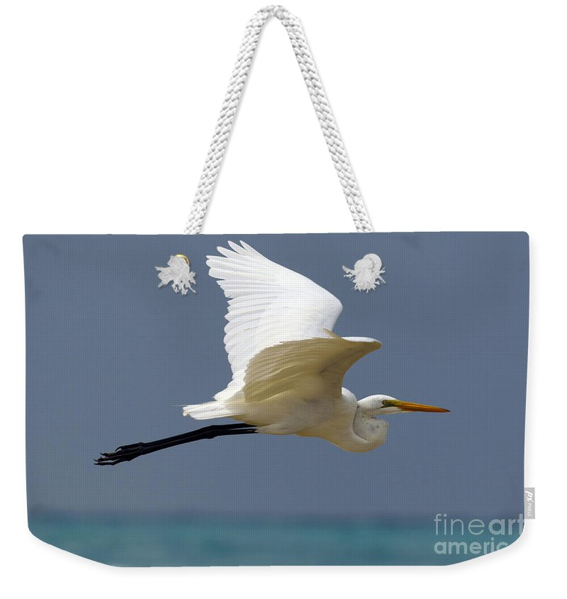 Great Egret Weekender Tote Bag featuring the photograph Great Egret Galapagos by Jason O Watson