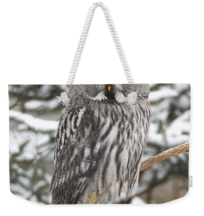 Feb0514 Weekender Tote Bag featuring the photograph Great Gray Owl In A Tree Germany by Duncan Usher