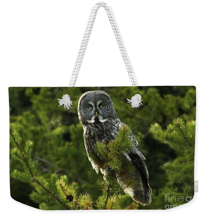 Owl Weekender Tote Bag featuring the photograph Great Grey Owl On The Hunt by Bob Christopher
