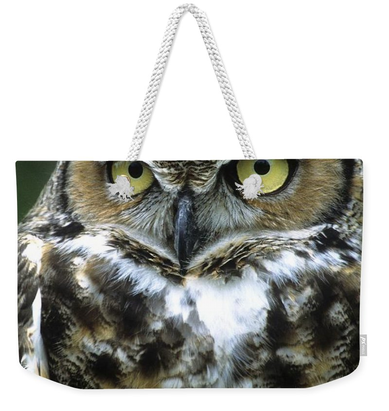 Owl Weekender Tote Bag featuring the photograph Great Horned Owl At Rest by Larry Allan