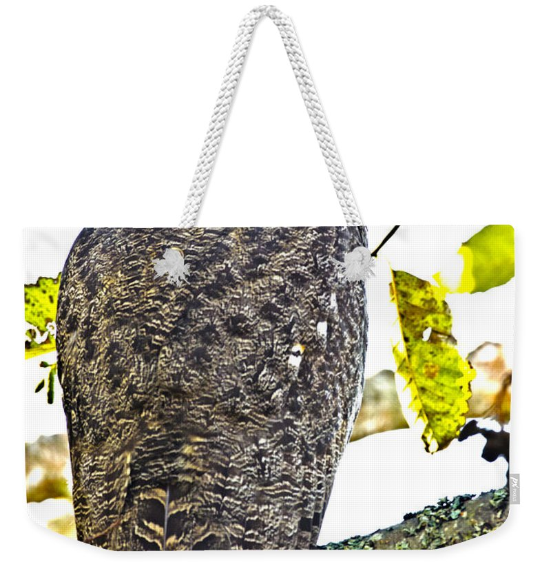 Great Horned Owl Weekender Tote Bag featuring the photograph Great Horned Owl by Rob Mclean